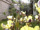 jardinage.TN__