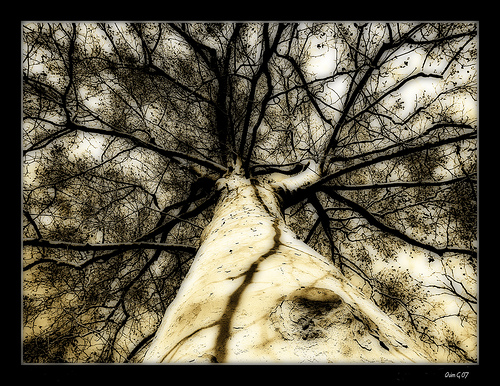 arbre_grande