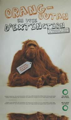 orangoutan_grande