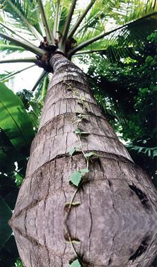 arbrecambodge_grande