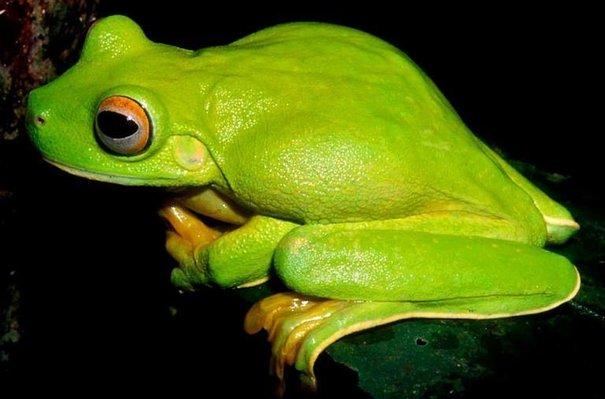 La Nouvelle Guinée et ses étranges espèces animales …