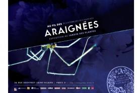 au_fil_des_araignees