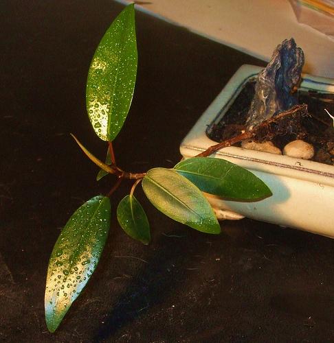 Les plantes dépolluantes, une arnaque ?