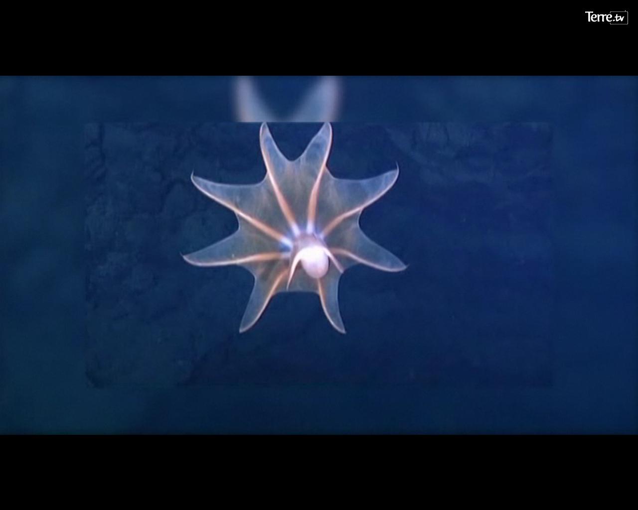 fonds marin