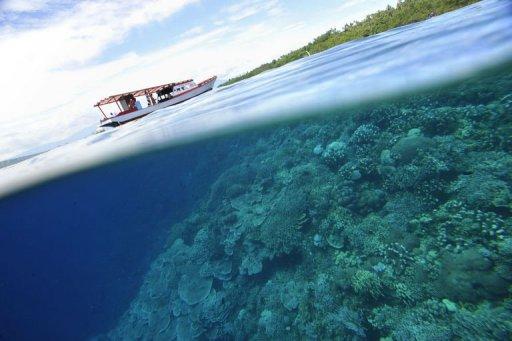 coraux-afp