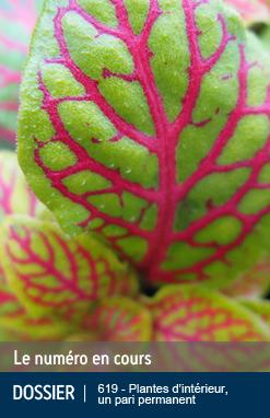Une revue des amateurs de plantes et de jardins sur le web !