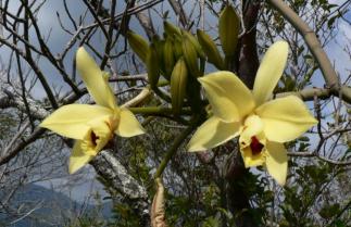Près d'une espèce de la flore de Mayotte sur deux est menacée